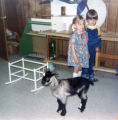 Story Hour baby goat