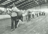 Cattle judging