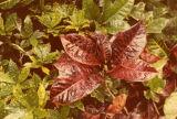 Domes plants
